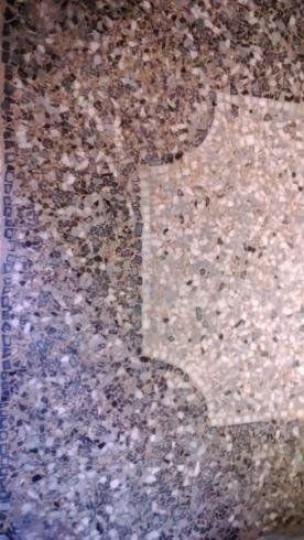 pavimenti-alla-genovese-la-sicura-genova26